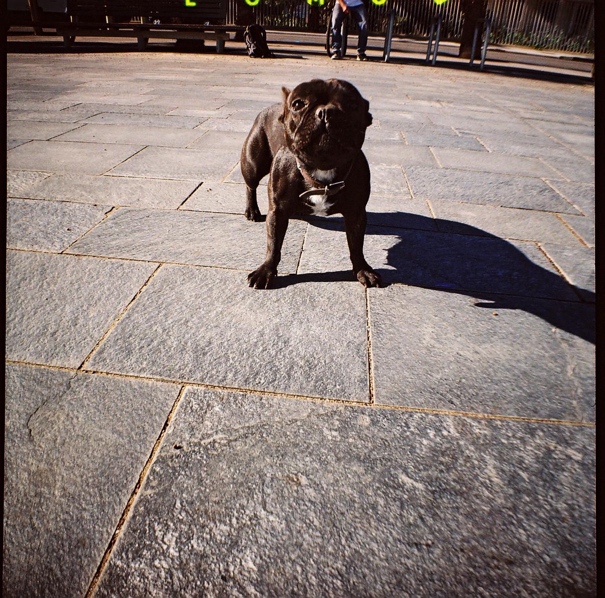Dog @ Barcelona